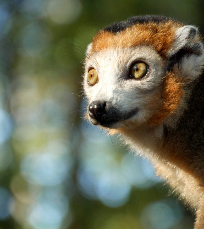 camping la chanterelle lemurien zoo