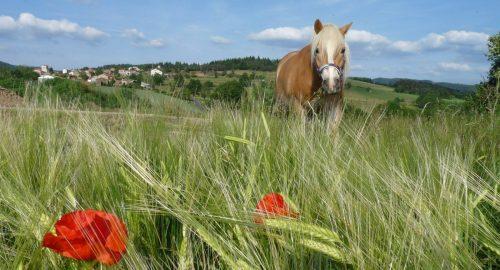 camping la chanterelle equitationvalmy